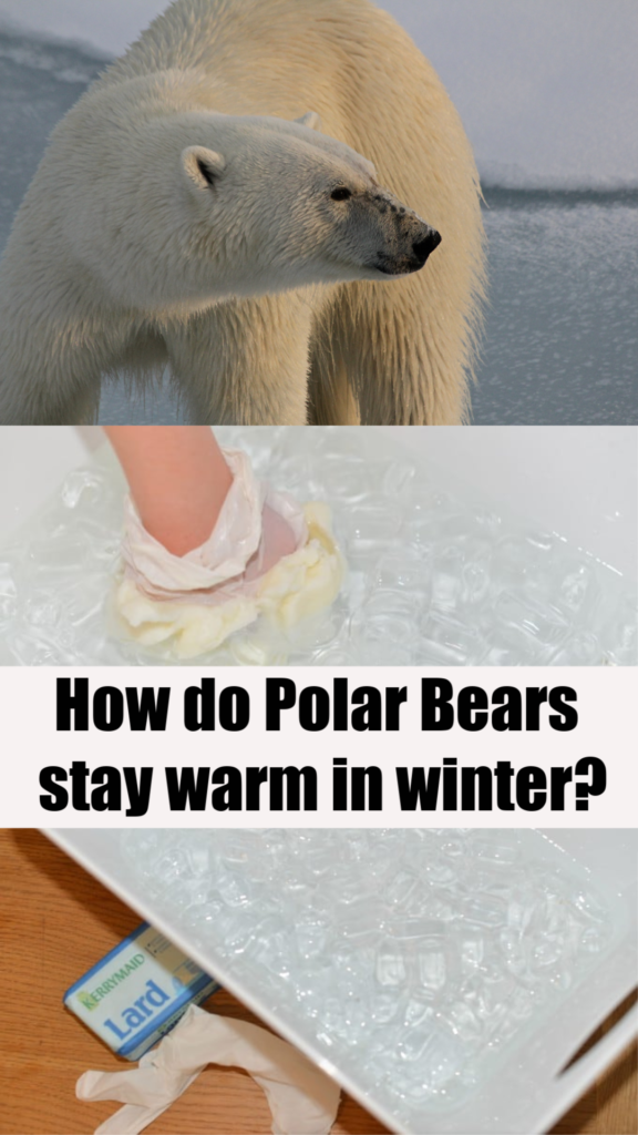 Photo of How do Animals Stay Warm in Winter? – Animal Science for Kids