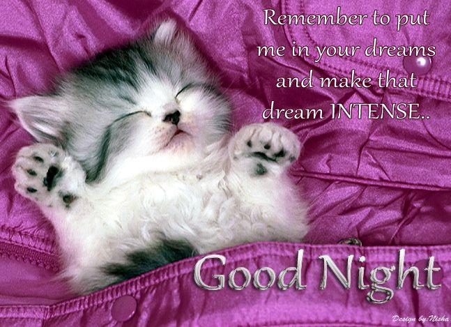 Epic Funny Cats Cute Cats Compilation 60 Minutes Hd Hq Good Night Cat Cute Good Night Cat Wallpaper