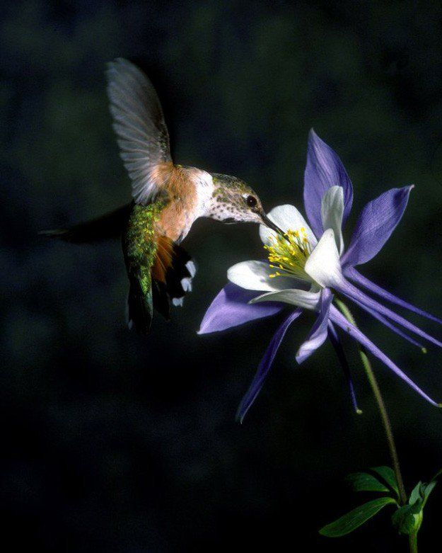 37 Flowers That Attract Hummingbirds To Keep In Your Homestead Flowers That Attract Hummingbirds How To Attract Hummingbirds Hummingbird Flowers