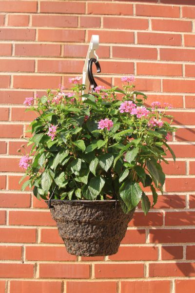 Lantana Hanging Basket Magnificent Growing Lantana In Containers  Tips On Caring For Lantana In Pots Design Ideas