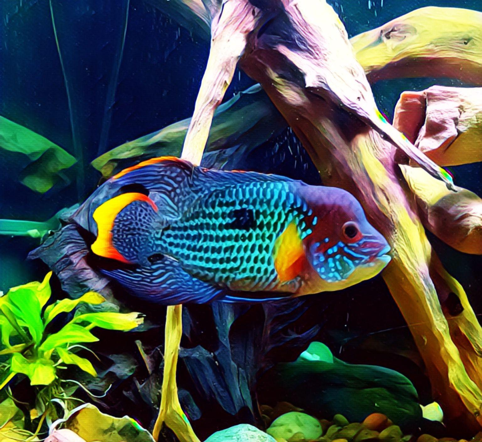 Aquarium Fishes Ing India Aquarium Fish Cichlid Fish Fish Tank Terrarium