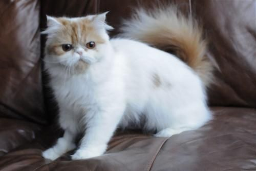Cyoot Kitteh Of Teh Day Emerald Eyes Katzenbabys Susse Tiere Tiere