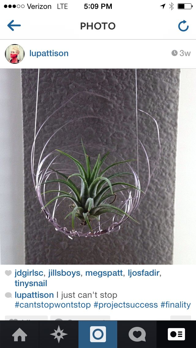 Air plant display in my home. 14 gauge wire twisted around and ...