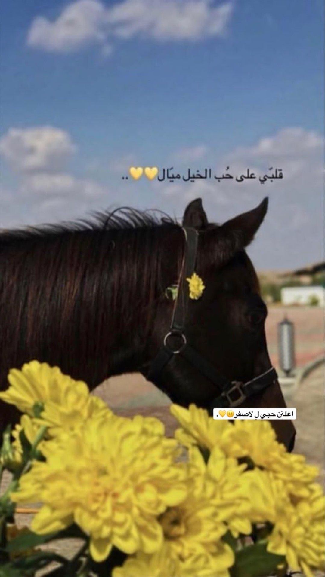 Pin By Alyya On سنابات Iphone Wallpaper Quotes Love Horses Cover Photo Quotes