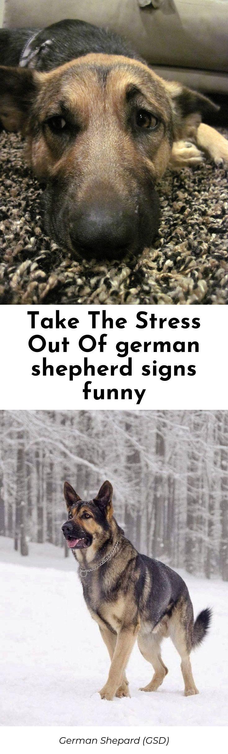 Time for austin german shepherd rescue best german