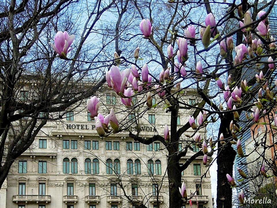 Primavera a Milano