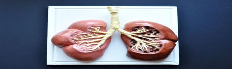 Lung Cake