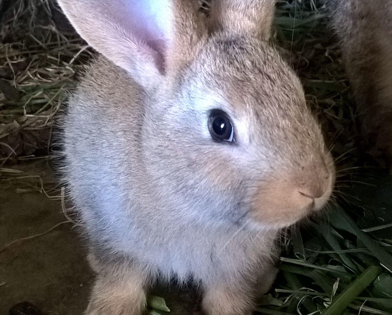 Coniglietti tenerosi