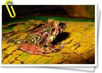 Nuevas especies descubiertas El descubrimiento de una nueva especie puede suponer para un científico el momento más importante de su carrera, pero algunos creen que también expone a animales raros y vulnerables al peligro de ser comerciados como mascotas salvajes, con resultados catastróficos comerciados como mascotas salvajes, con resultados catastróficos. + info: http://www.barrameda.com.ar/dp