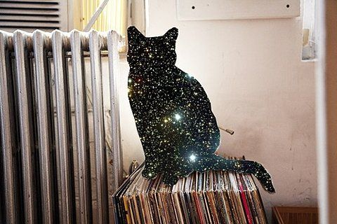 sparkle kitty!