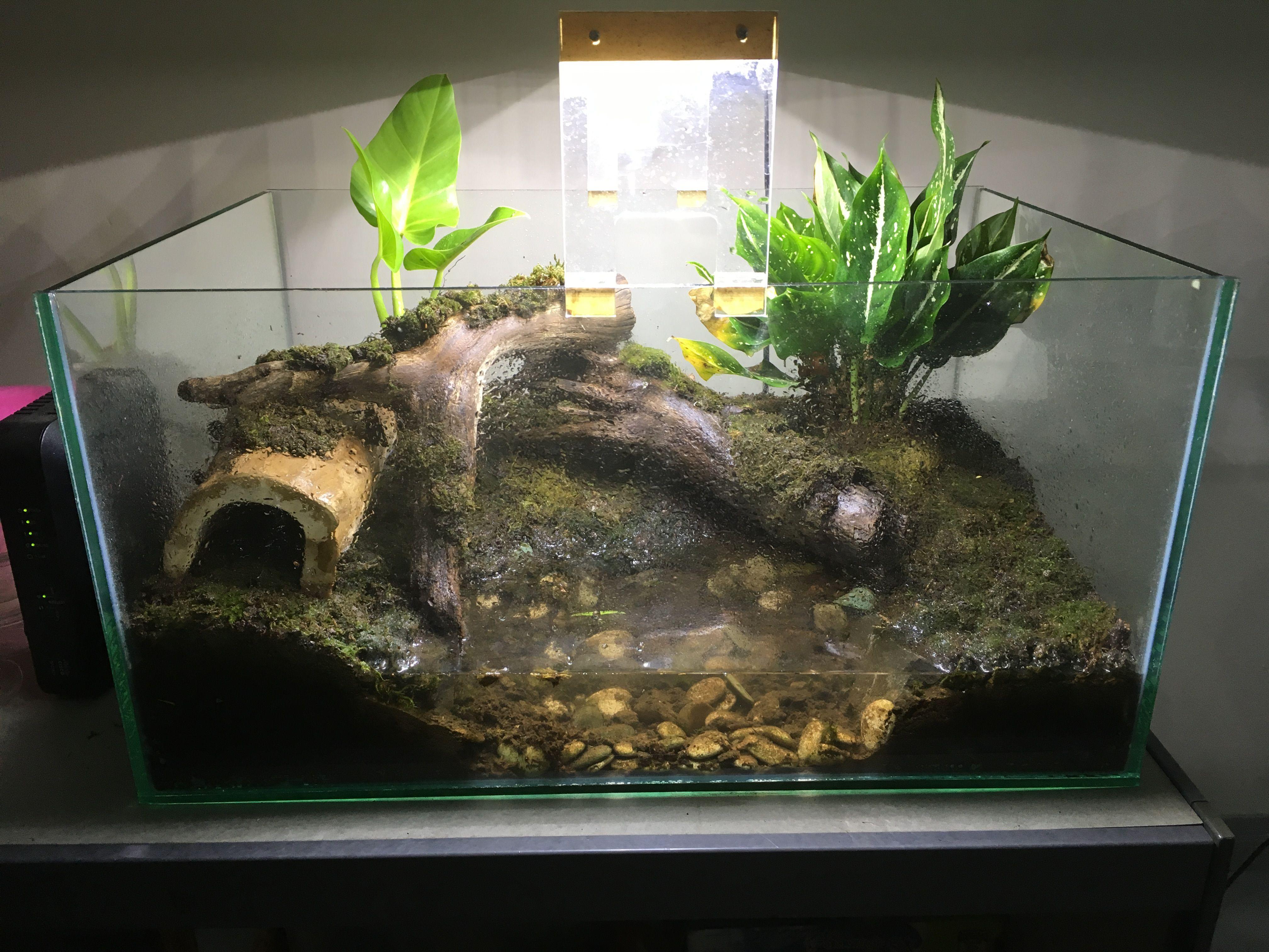 Slson Reptile Plants Hanging Silk Terrarium Plants Fake