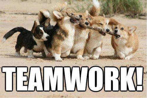 {*} Corgi Love. teamwork