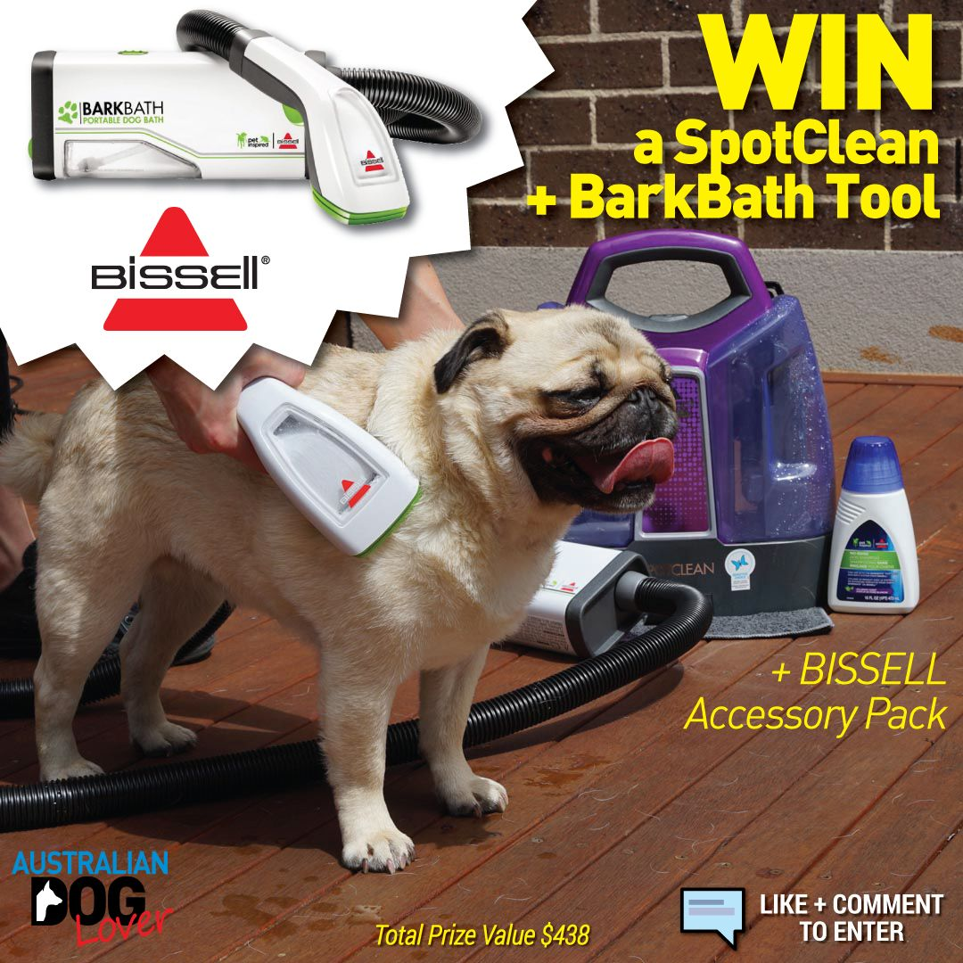 Bissell Barkbath Tool Spotclean Competition Australian Dog