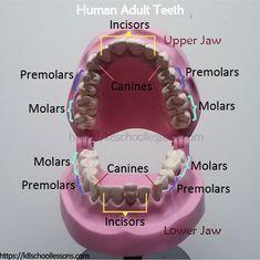 Fat Wisdom Teeth Location #TeethWhiteningTrainer #DentalSurgeryTools #dentalassistant
