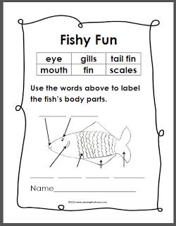 simple fish anatomy diagram ocean unit study pinterest. Black Bedroom Furniture Sets. Home Design Ideas
