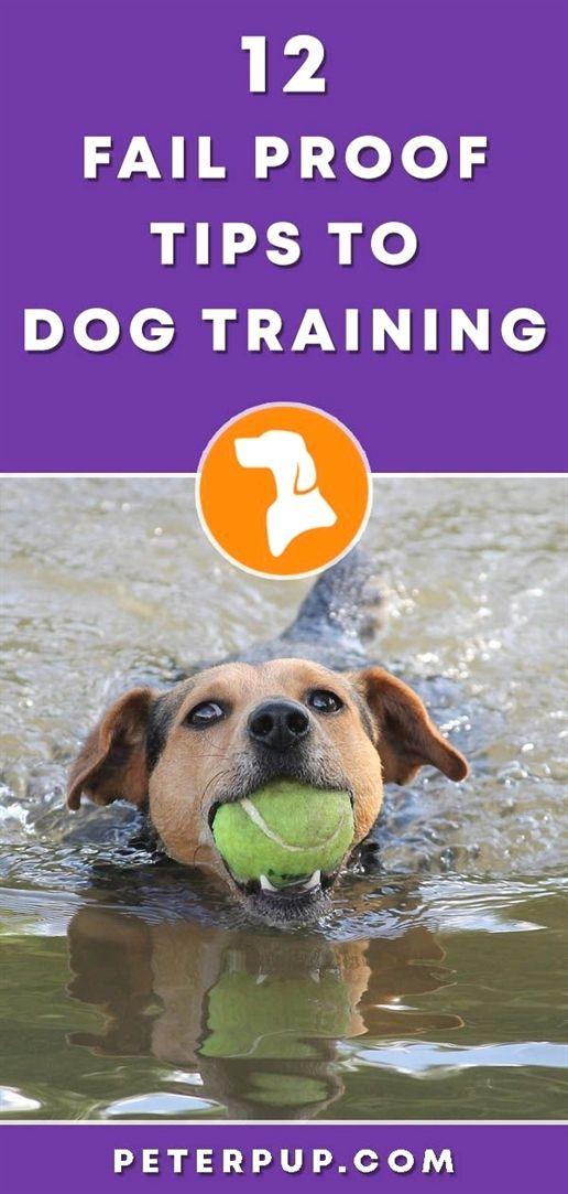 Dog Training Door Hanging Bell Dog Training Recall Exercises