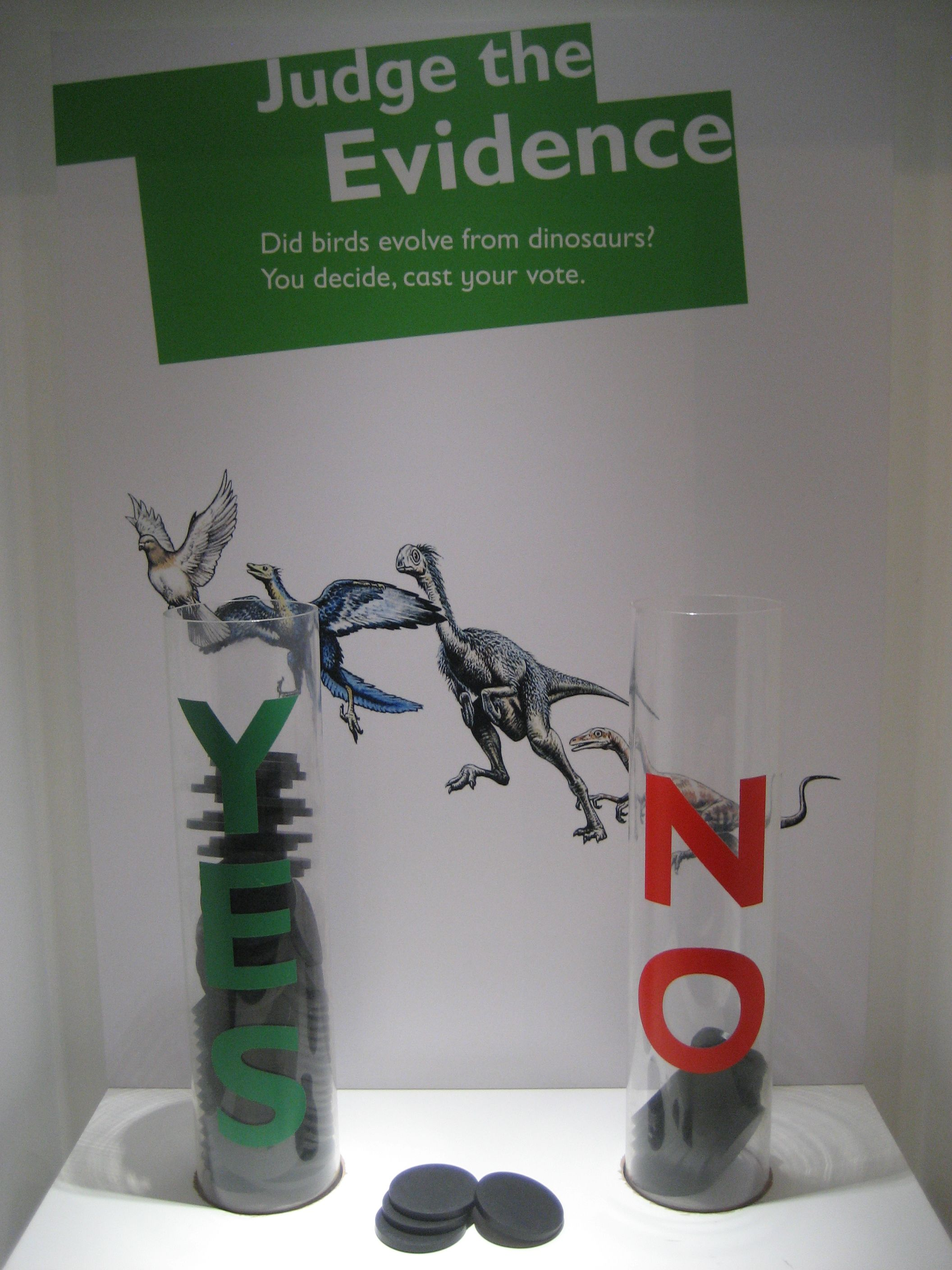 Did birds evolve from dinosaurs? Visitors vote at the end of the