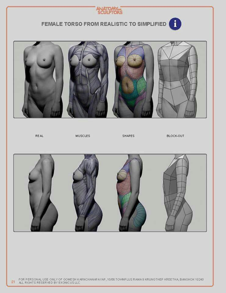 Pin by STACY LIUSHER on anatomical drawing | Pinterest | Anatomy ...