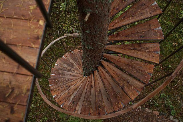 Spiral Stairs Around Tree Trunk Art Ideas Tree Deck Bench   Spiral Staircase Around Tree Trunk   Treehouse Masters   Ter Kulve   Canopystair   Robert Mcintyre   Wooden Stairs