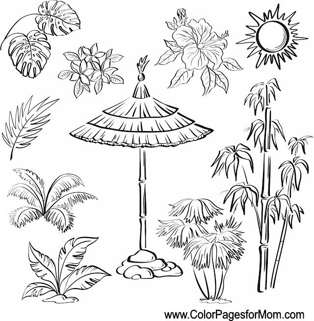 Vintage Coloring Pages Trees Plants And Flowers