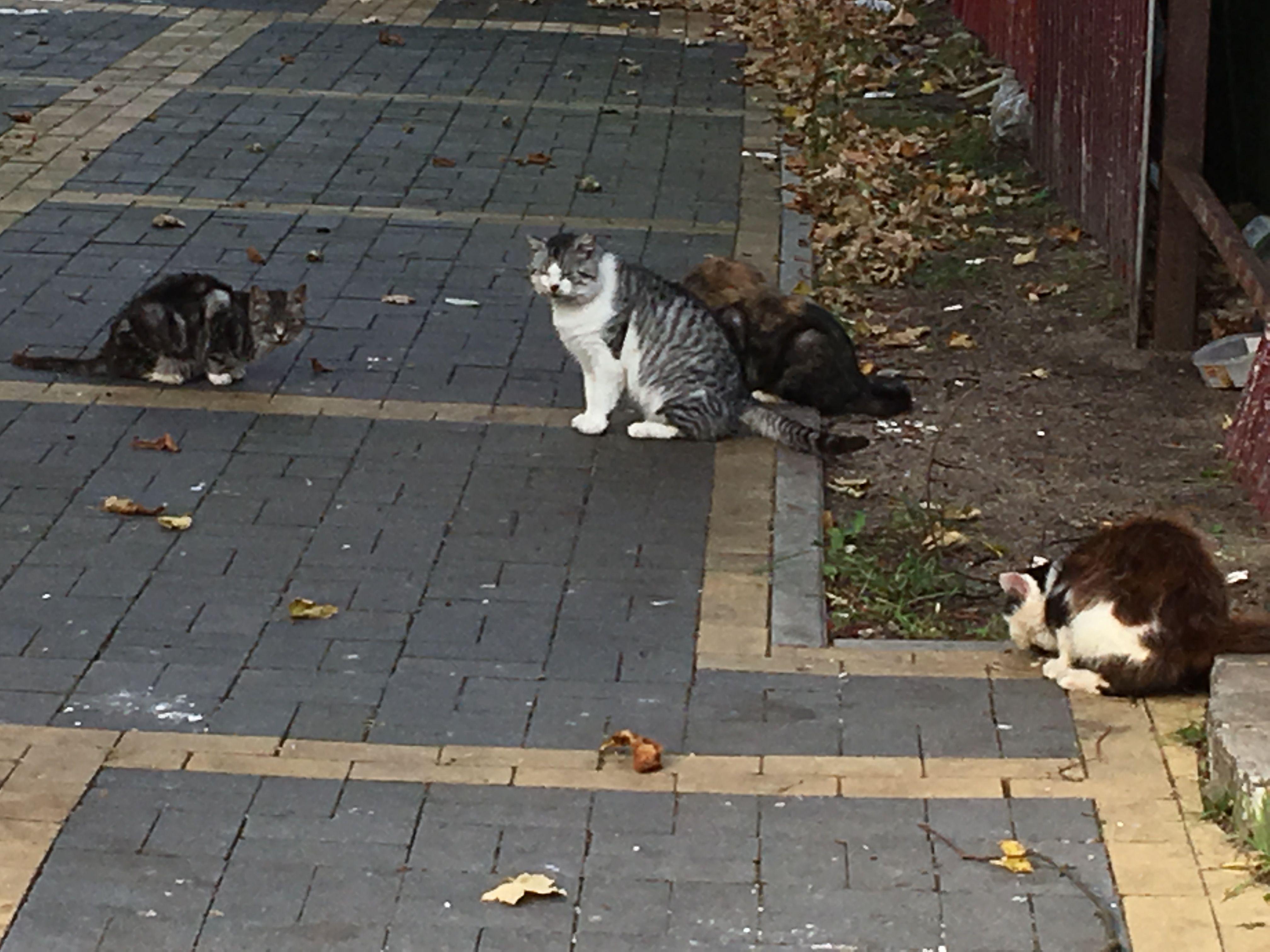 Еще кошачья компания
