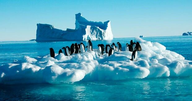 La Antartida Es El Continente Mas Austral De La Tierra Que Contiene El Polo Sur Geografico Esta Sit America Del Sur America Del Norte Circulo Polar Antartico