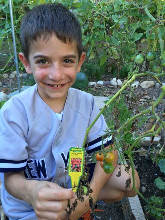 Surefire Way To Grow Better Produce   Fresh From The DIY Backyard Farm Blog    GRIT Magazine