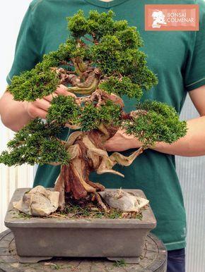Centro profesional dedicado exclusivamente al bonsái#bonsai #centro #dedicado #exclusivamente #profesional