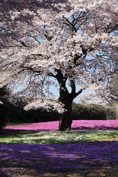 Nature Prints Homeschool Science Corner Beautiful Tree Blossom Trees Tree