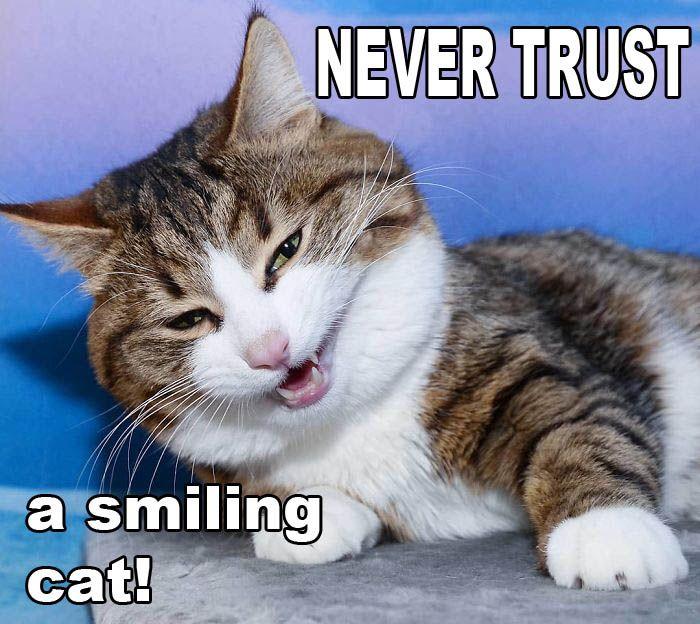 Never_trust_a_smiling_cat   Smiling cat, Cats, Cat jokes