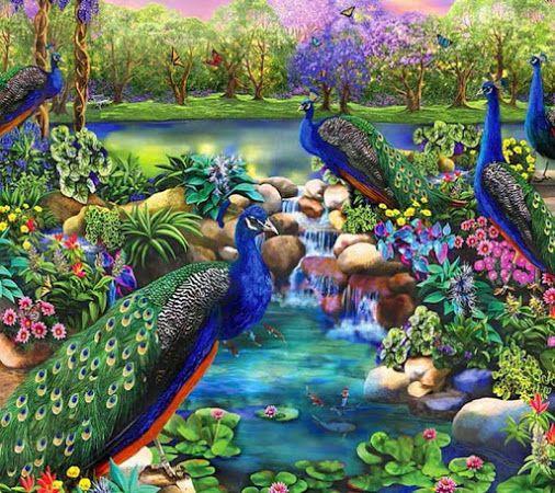 Peacock fee Pinterest Artwork