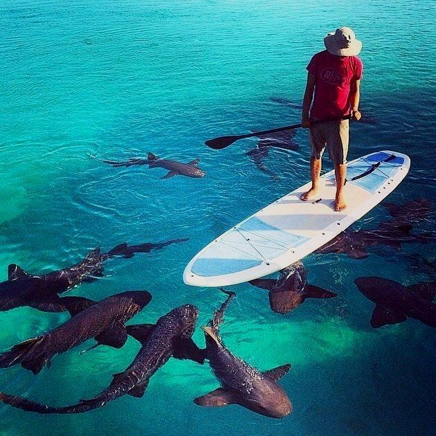imbedded meaning in tamil destinations boarding Shark