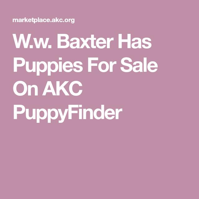 W.w. Baxter Has Puppies For Sale On AKC PuppyFinder
