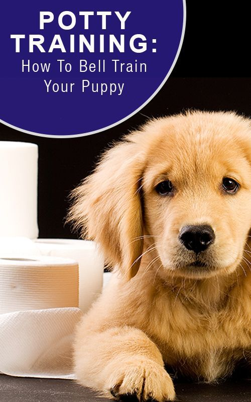 Potty Training How To Bell Train Your Puppy (With images