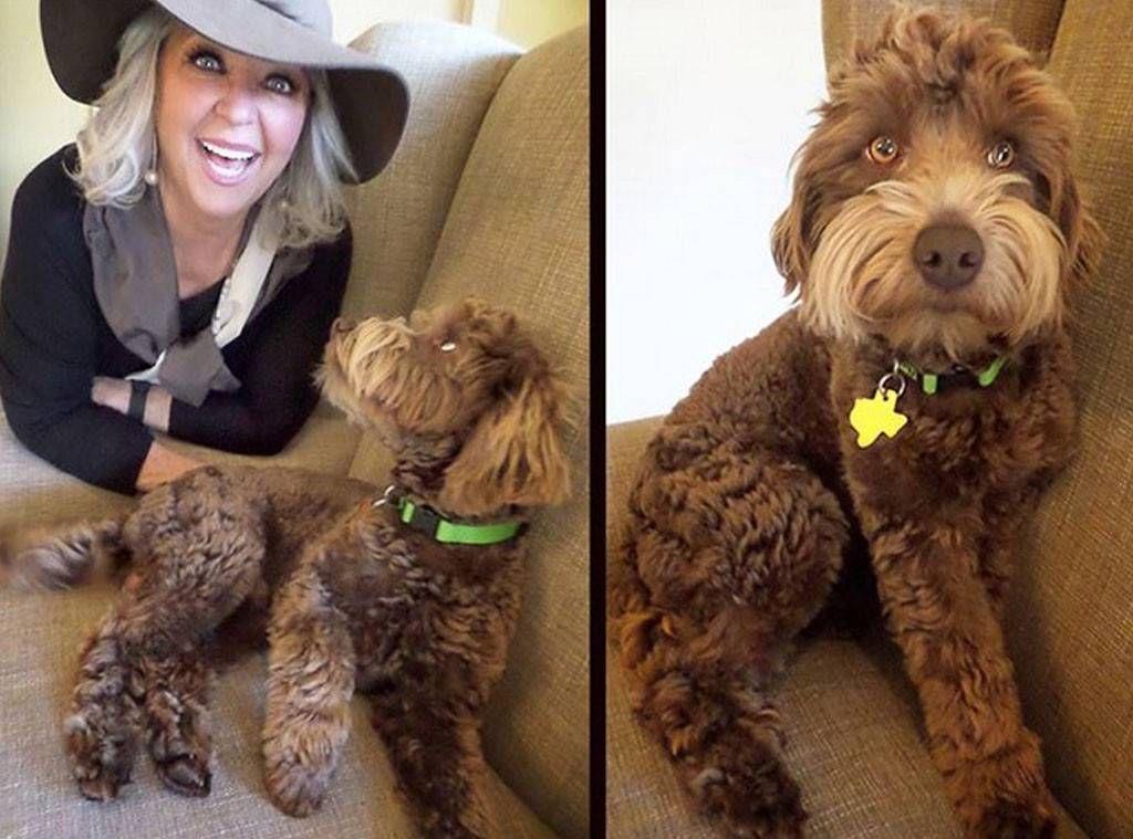Paula Deen catsdiyshelves Goldendoodle, Dog probiotics