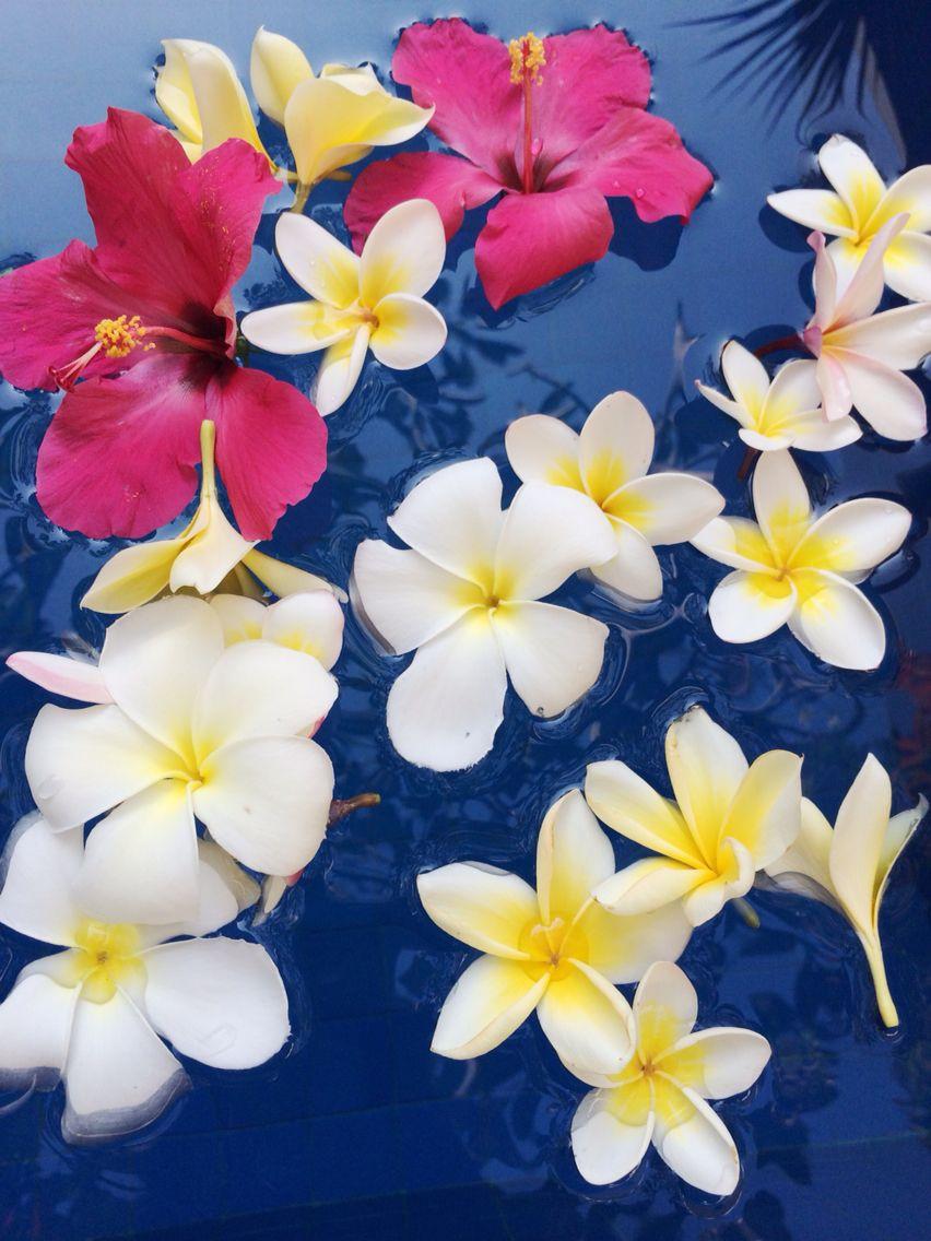Plumeria And Hibiscus 水に浮かぶプリメリアとハイビスカス エキゾチックな花 美しい花 ハワイ 花