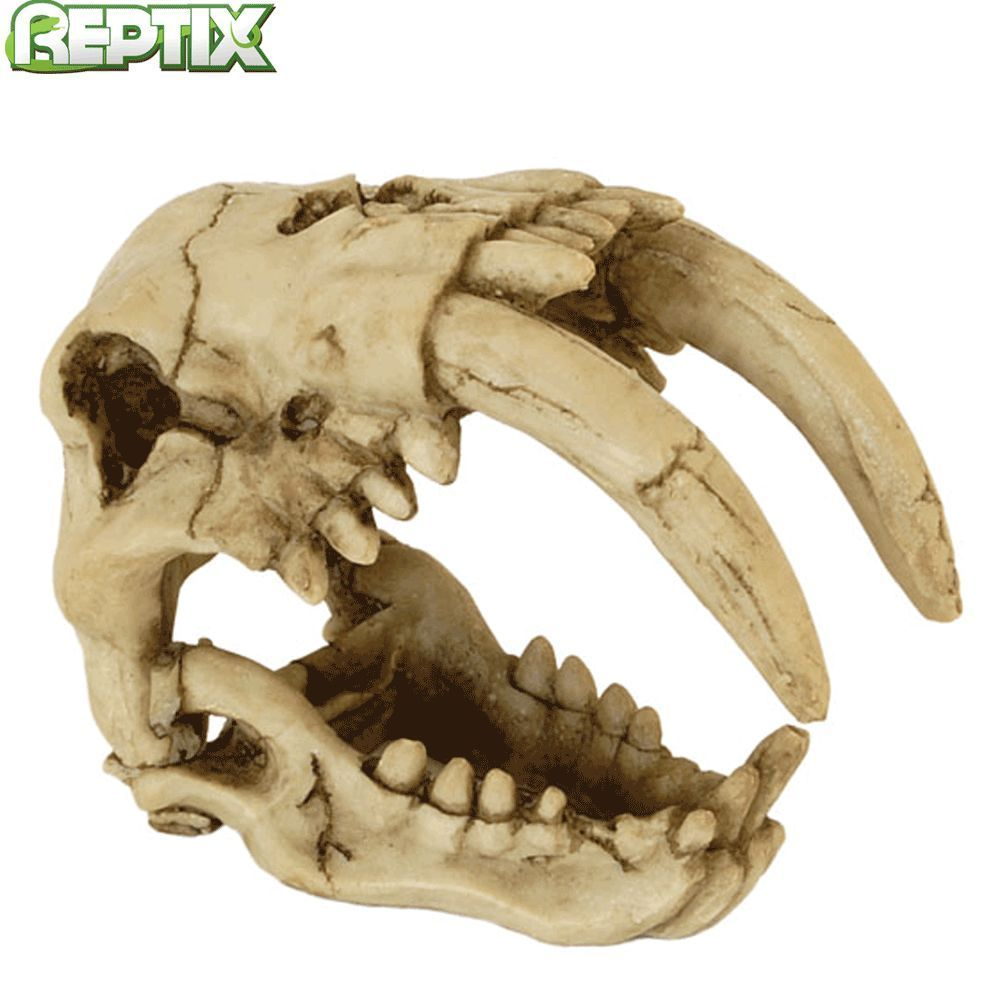 Reptile Sabre Tooth Tiger Skull Vivarium Decoration Resin