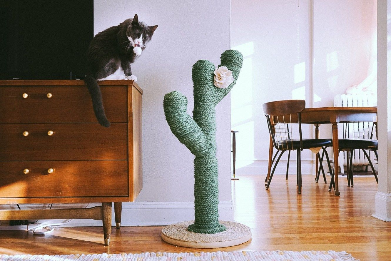 make a super cute cactus scratching post! Scratching
