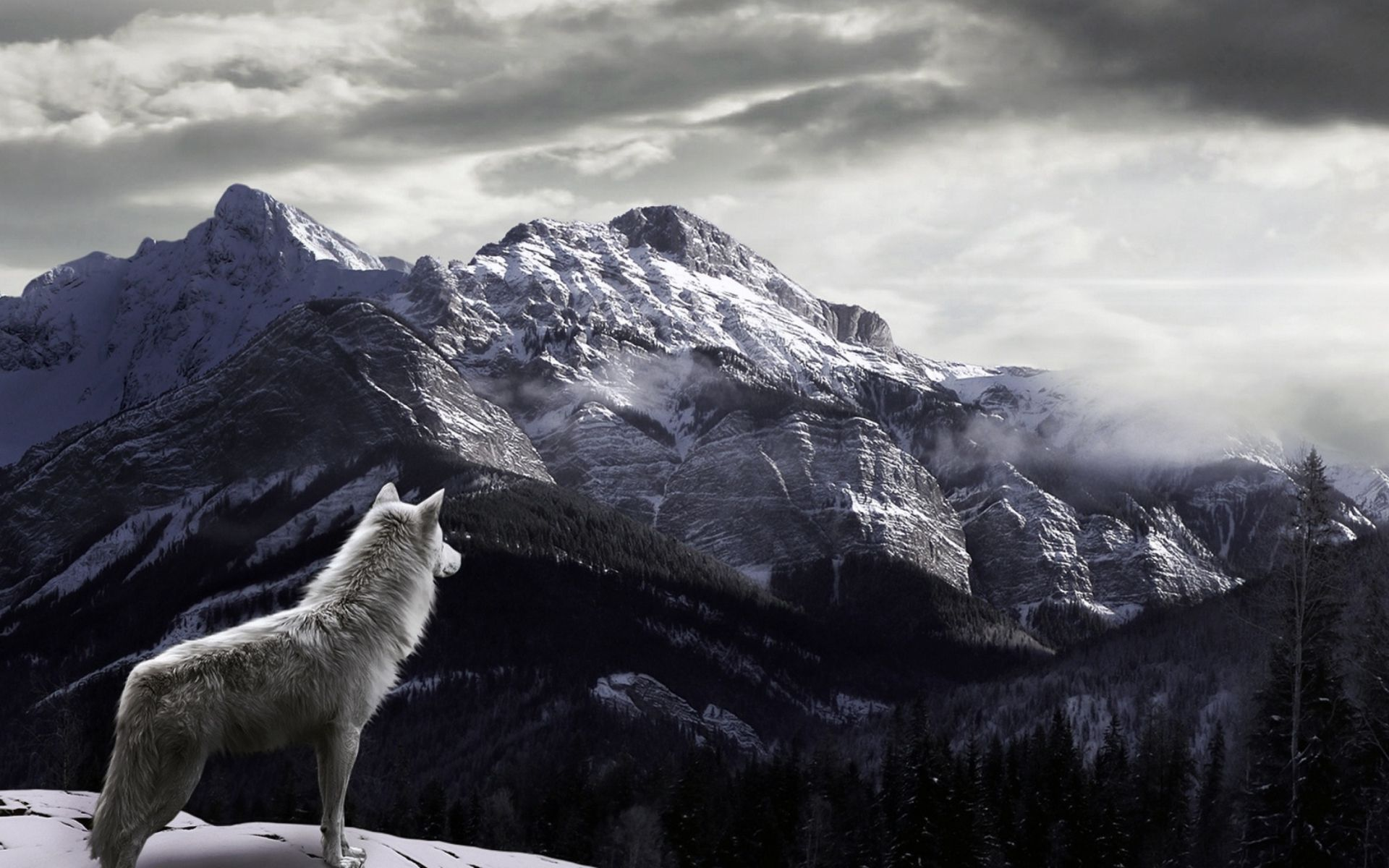 Angry Wolf Wallpapers 4K iPhone Wolf wallpaper, Iphone