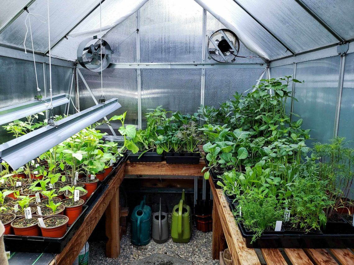 A Beginner S Guide To Using A Hobby Greenhouse Homestead And Chill In 2020 Hobby Greenhouse Backyard Greenhouse Heating A Greenhouse