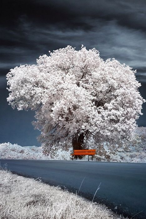 winter bench