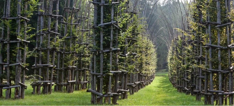 (52) Cattedrale vegetale/Tree Cathedral - Giuliano Mauri, 2001