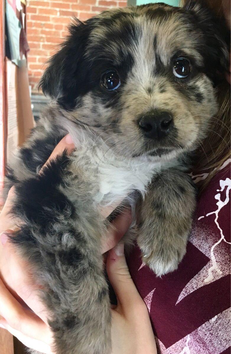 It S Like An Oreo Milkshake Oreo Milkshake Pets Cute Puppies