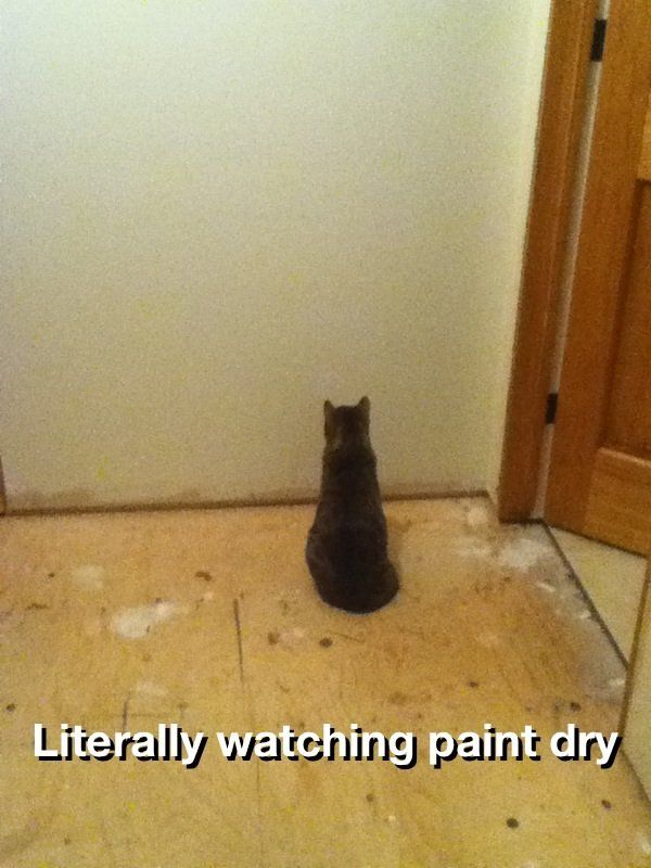 watching paint dry (With images) | Cute funny animals, Dumb cats ...