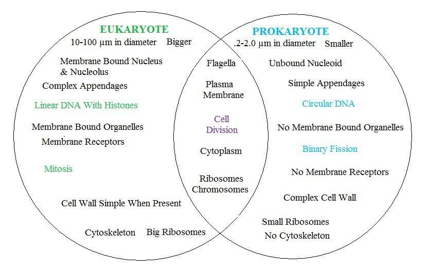 Prokaryote Vs Eukaryote Science Pinterest Microbiology