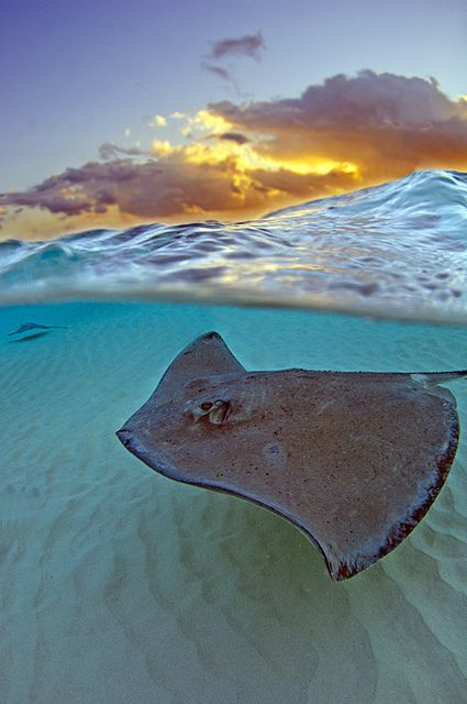 sunrise Caymans by vazuw on Flickr.