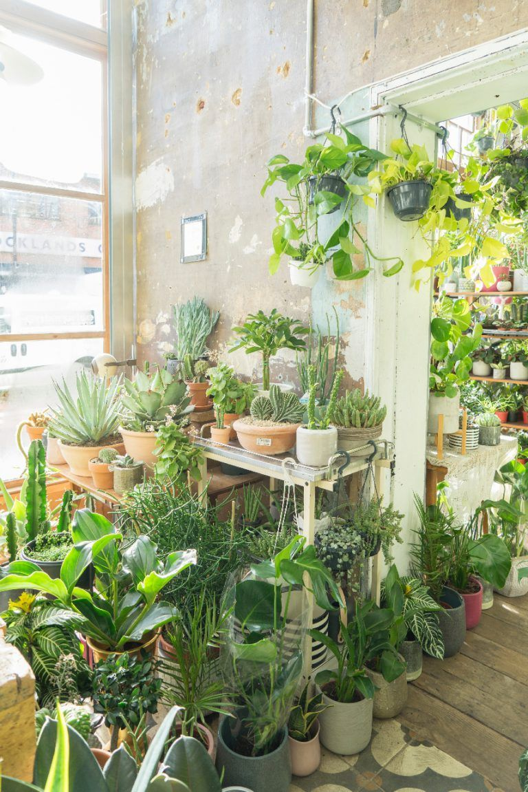 Conservatory Archives In London Plants Indoor Plants Best