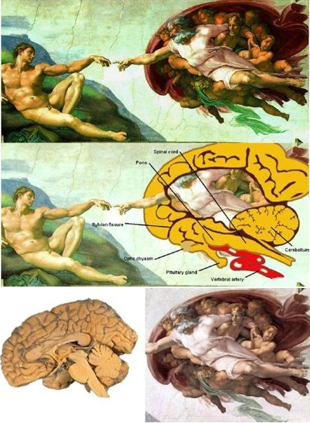 10 Famous Paintings With Hidden Codes Oddee Michelangelo The Creation Of Adam Sistine Chapel