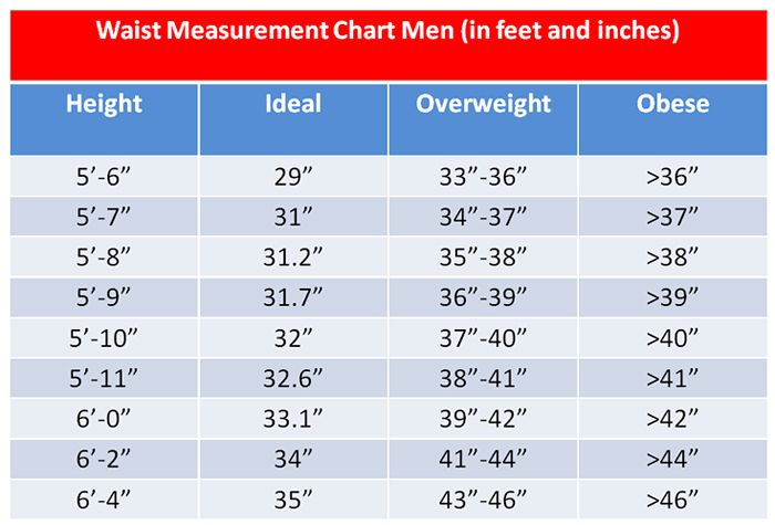 waist size chart for men: A must read article why cholesterol is essential for optimal