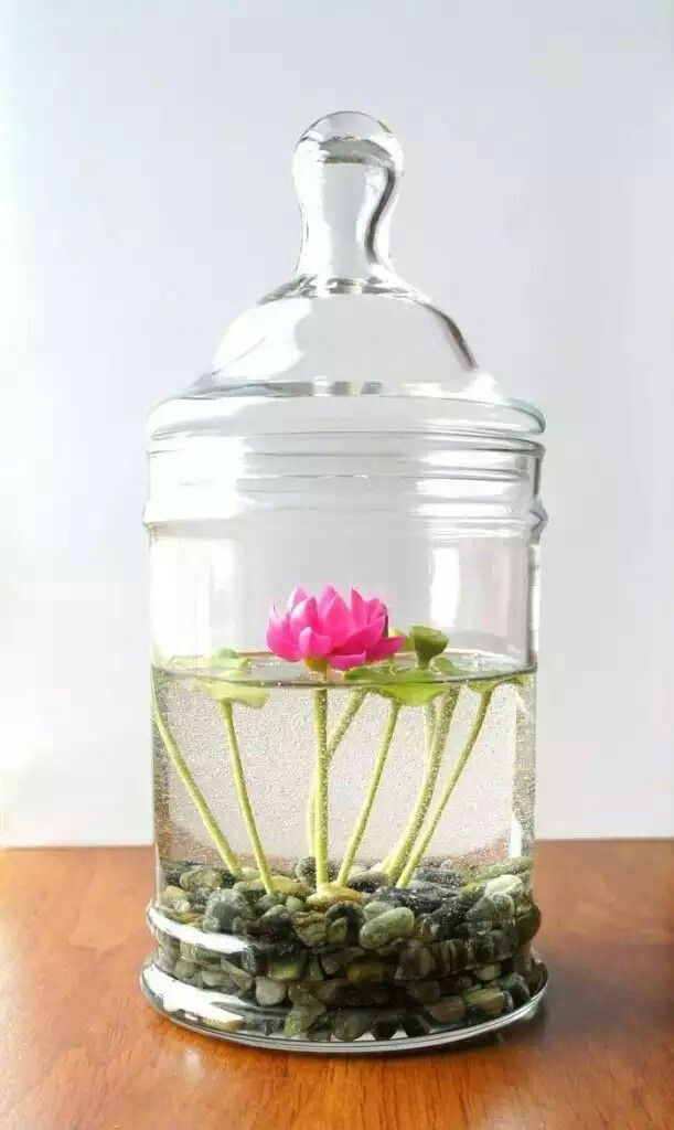 Indoor Water Garden Ideas Part - 21: Check Out The 15 Amazing Indoor Water Gardening Ideas #DIY #Indoor #Garden